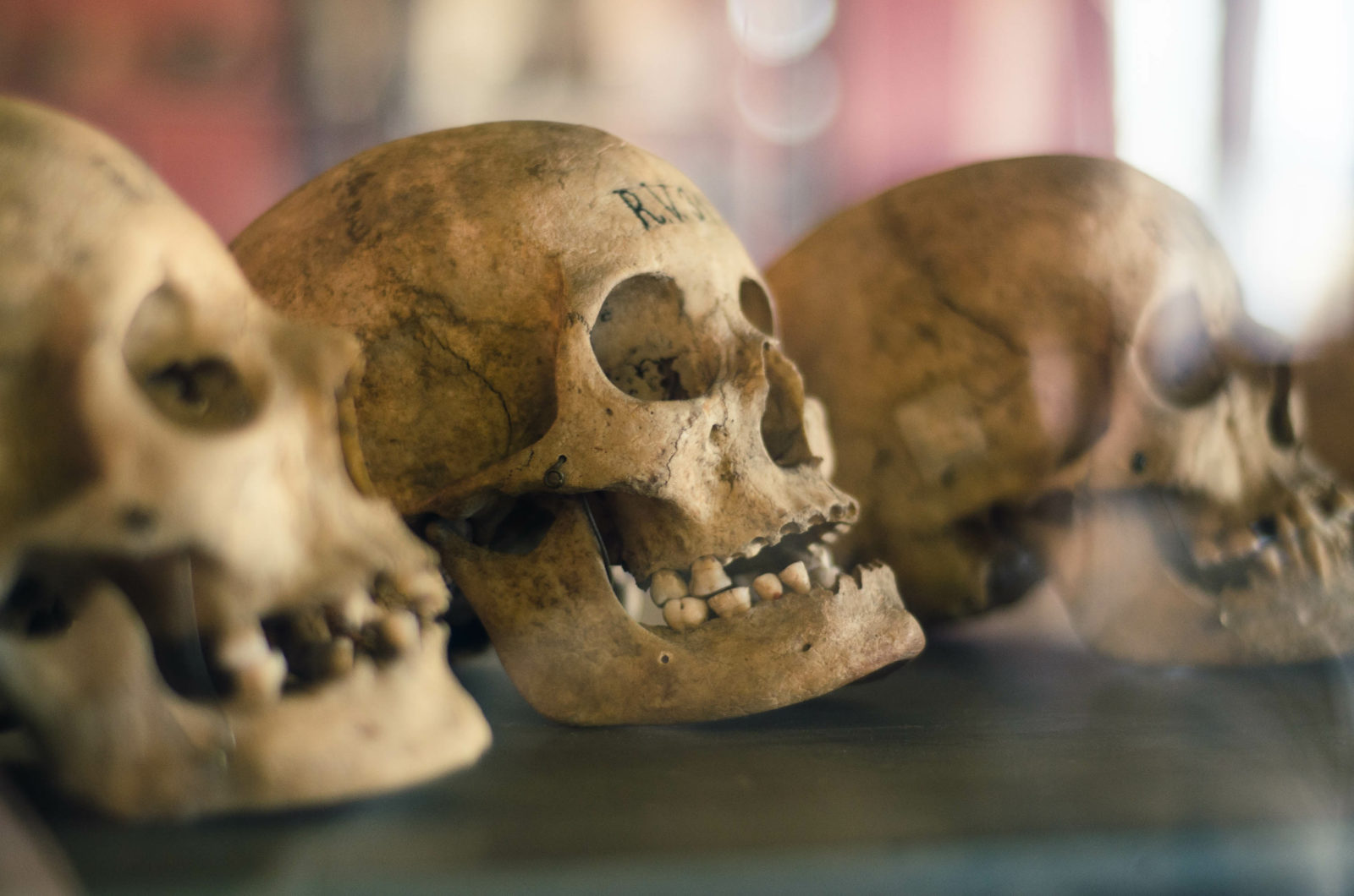 Skulls of dead people