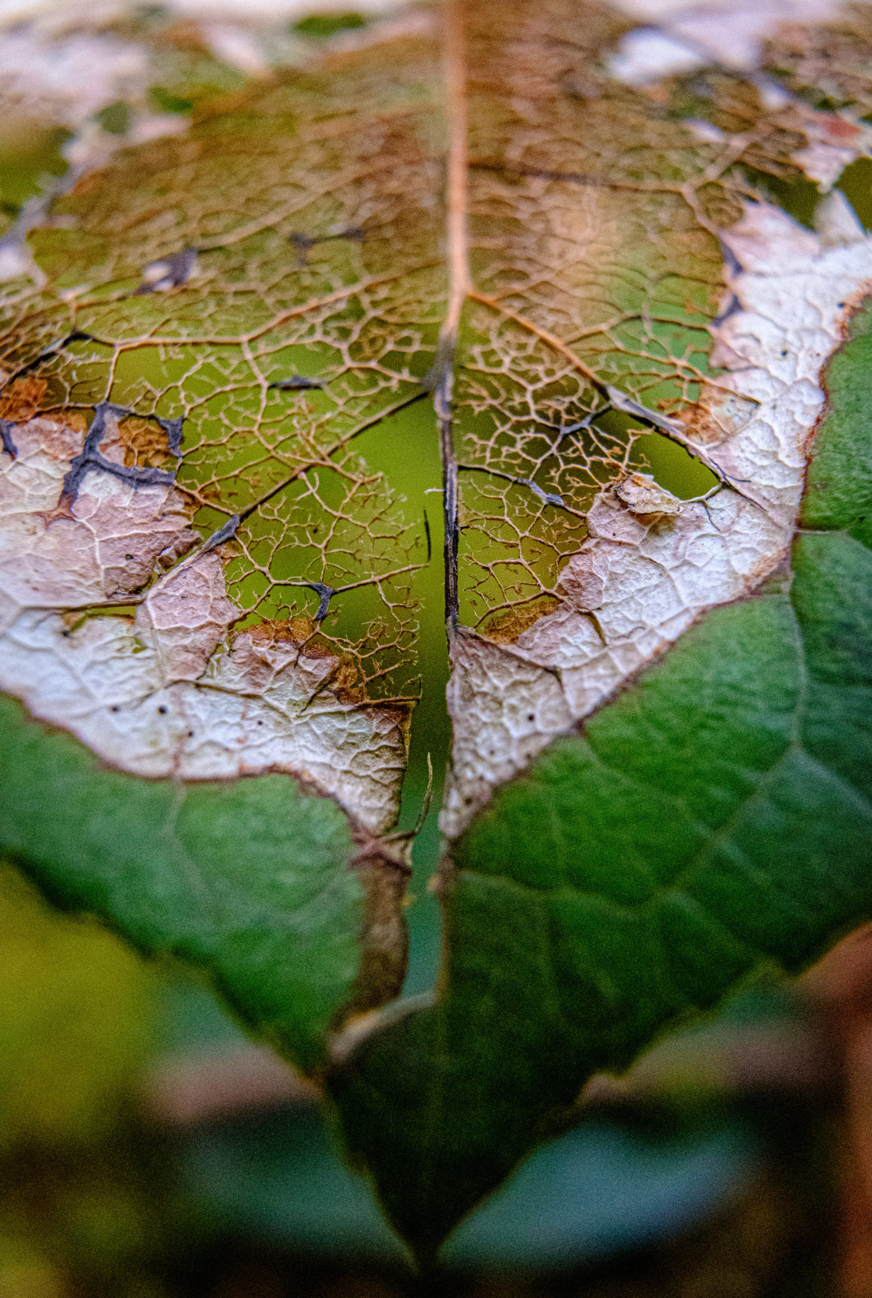 A macro of a deteriorating leaf